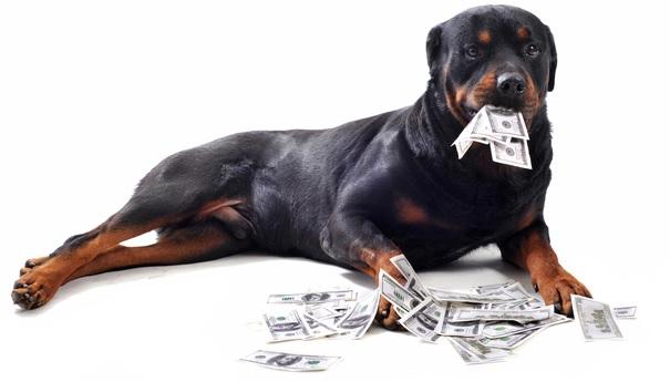 お札をくわえた犬