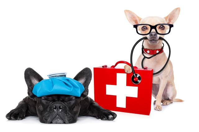 病気の犬と医者の犬