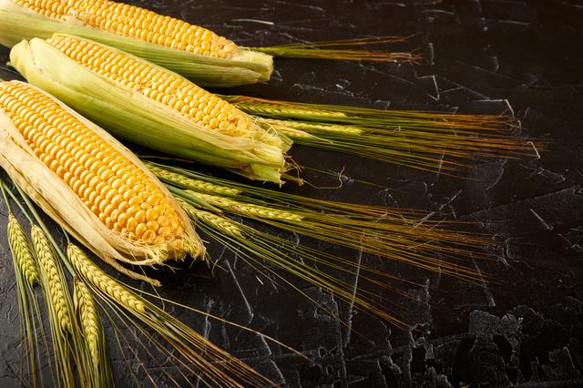 とうもろこしと小麦