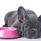 犬 ドッグフード 食べない
